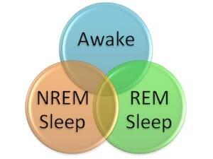 REM and NREM sleep