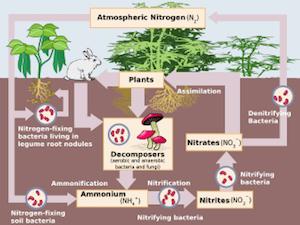 Environmental Nitrogen Cycle